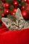 Stock Image : Christmas kitten