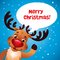 Stock Image : Christmas reindeer red nose