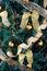 Stock Image : Christmas tree background