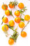 Stock Image : Clementines