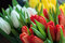 Close-up of bouquets of colorful tulips, red, yellow, white in b