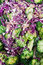 Stock Image : Close up of salad with brocolli, purple cabbage and feta