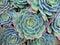 Stock Image : Succulent Details