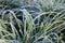Stock Image : Closeup Frozen Grass