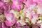 Stock Image : Hydrangea