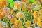 Stock Image : Closeup on yellow peony