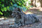 Stock Image : Clouded Leopard