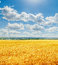 Stock Image : Clouds in blue sky over golden harvest