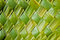 Stock Image : Coconut leaves