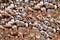 Stock Image : Coconut skin