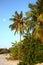 Stock Image : Coconut tree on Maldives beach