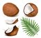 Stock Image : Coconuts with leaves.