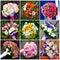 Stock Image : Collage of beautiful wedding flowers