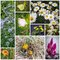 Stock Image : Collage with flowers