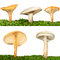 Stock Image : Collection of five mushrooms