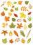 Stock Image : Colorful autumn leaves set