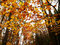 Stock Image : Colorful autumn trees