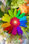 Stock Image : Colorful flower
