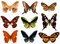 Stock Image : Colorfull butterflies