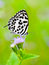 Stock Image : Common Pierrot, Castalius rosimon, white butterfly