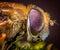 Stock Image : Compound fly eye macro