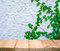 The concretw wall green ivy plant