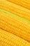 Stock Image : Corn Cob woith golden seed