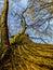 Stock Image : Cracking tree