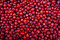 Stock Image : Cranberry