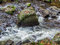 Stock Image : Creek with running water