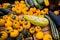 Stock Image : Cucurbitaceae