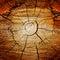 Stock Image : Cut wood dark background texture