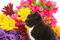 Stock Image : Cute baby kitten and flowers