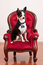 Stock Image : Cute Chihuahua on red old fashioned chair