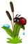 Stock Image : cute ladybug