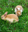 Stock Image : Cute rabbits