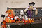 Stock Image : Dalmatian puppy with patch in Halloween decoration