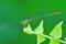 Stock Image : Damselfly on leaf