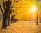 Stock Image :  De herfst