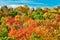 Stock Image :  De herfst bij Gesneden Rivier