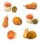 Stock Image : De inzameling van de pompoen