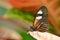 Stock Image : De Vlinder van de brievenbesteller