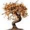 Stock Image : Dead bonsai tree