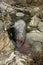 Stock Image : Dead grey seal.