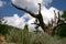 Stock Image : Dead Tree in a Mountain Garden