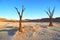 Stock Image : Dead trees