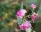 Stock Image : Deco flower