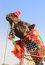 Stock Image : Decorated camel during festival in Pushkar India