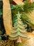 Stock Image : Decorative Christmas tree
