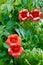 Stock Image : Decorative flowerses